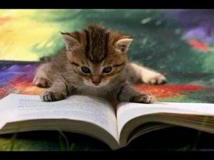 kedi-gorsel