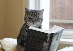Kediler ile İlgili Şiirler