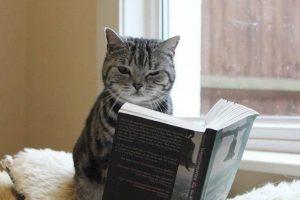 kedilerle-ilgili-siirler